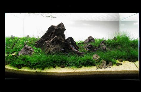 Aquascape Indonesia by Design Aquascape Indonesia Images