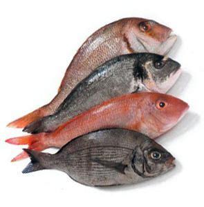 persico come cucinarlo cuocere il pesce i metodi di cottura paperblog