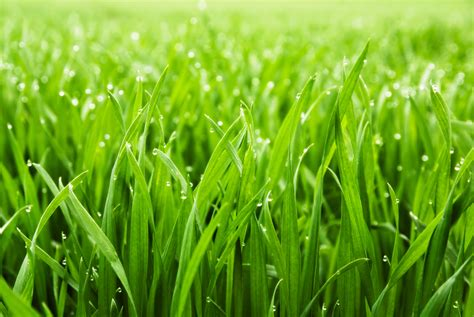 Grass Pictures by Why Is The Grass In The Morning Wonderopolis