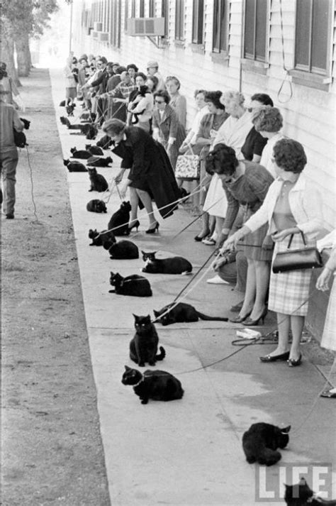 black cats auditioning for tales of terror
