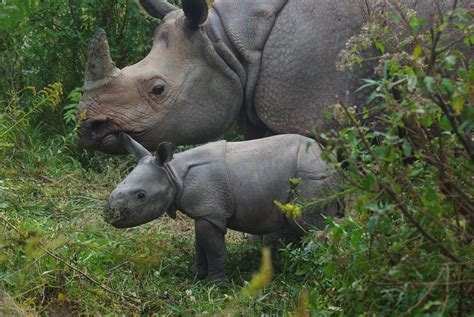 the wilds baby rhino born at the wilds wbns 10tv columbus ohio