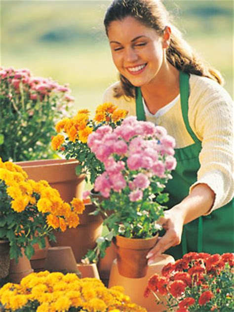 Flower Shop Delivery by Chicago Area Flower Shops And Florists