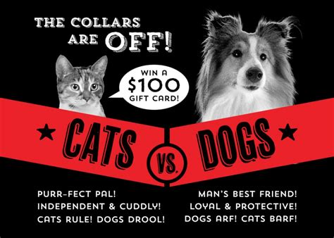 What Is The Difference Between A Contest And A Sweepstakes - cat vs dog photo contest nugget markets daily dish