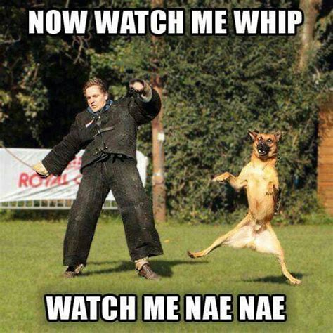 Law Dog Meme - 185 best images about cops r funny too on pinterest