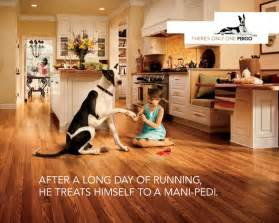 pergo the dog mi casa pinterest