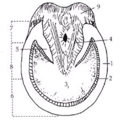 hoof diagram hoof faqs hc equestrian