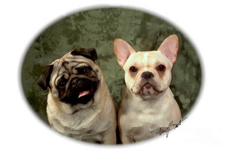 frenchie and pug buddies pug and frenchie digital by maxine bochnia