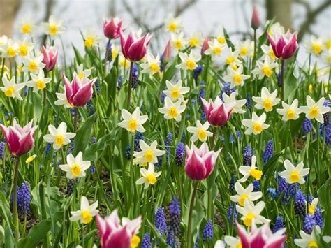Ideas For Daffodil Varieties Design Plant A Bed Of Bulbs Hgtv