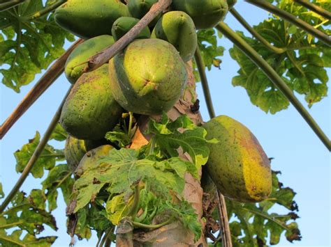 fruit trees names a guide to the fruit in brazil