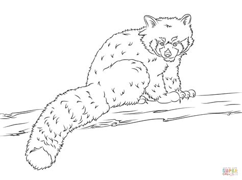red panda coloring page free printable coloring pages