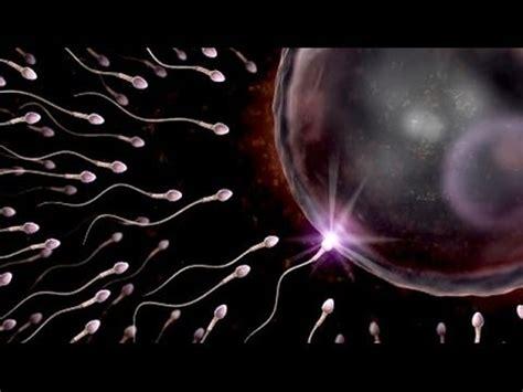 imagenes reales embarazo semana a semana concepci 243 n y evoluci 243 n en los primeros meses de embarazo