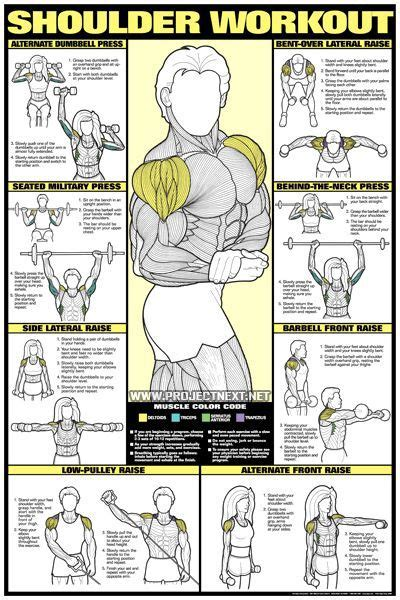 17 best ideas about dumbbell back workout on