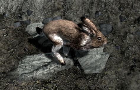 Rabbit Rage Players Populate Skyrim With Killer Rabbits Ghostly Horses Wired