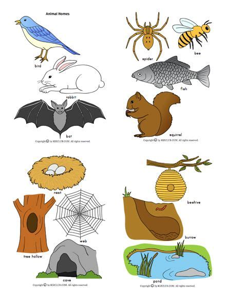 printable animal homes 33 best kindergarten animal habitats creek fieldtrip