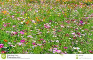 Image Flowers Garden Flowers Garden Stock Photography Image 34615202