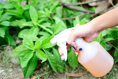 Bicarbonate De Soude Sol by Bicarbonate De Soude Au Jardin 10 Applications Astucieuses