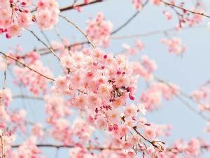 fiori di bach posologia la floriterapia con i fiori californiani