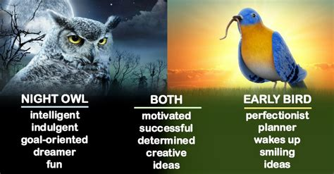 are you an early bird or a night owl