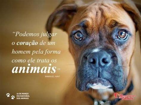 Companheiros Leais 25 Melhores Ideias Sobre Cachorros Pastores Alem 227 Es No