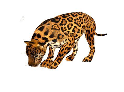 imagenes de uñas animal print 2015 gifs im 193 genes de leopardo y tigres