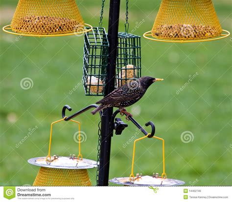 feeding backyard birds feeding backyard birds stock photo image 14452740