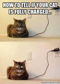 how to tell if your cat is fully charged