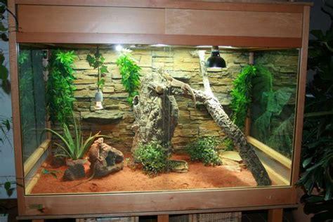 beleuchtung terrarium terrarien bartagame auf brilliant dragons de