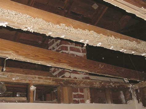 Termite Tunnels Hanging From Ceiling by Termite Pictures Photos Images Of Termites Damage
