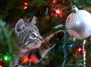 Sea Decorations For Home how to keep your cat off the christmas tree cathealth com