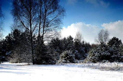 imagenes invierno hd foto gratis invierno nieve 193 rbol jard 237 n imagen