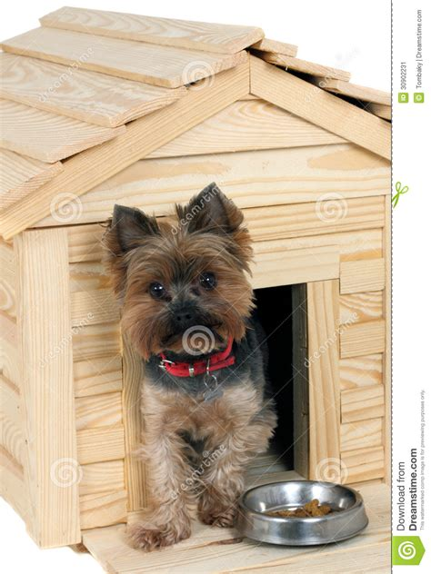 small house dogs smalldog with wooden s house stock image image 30902231