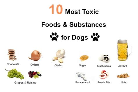 what human food can dogs eat bunkblog part 2 why is it bad to feed your dog human food