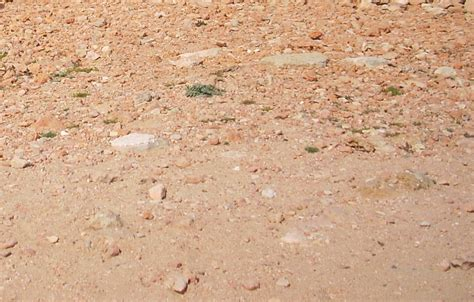 desert ground texture of desert ground cc content