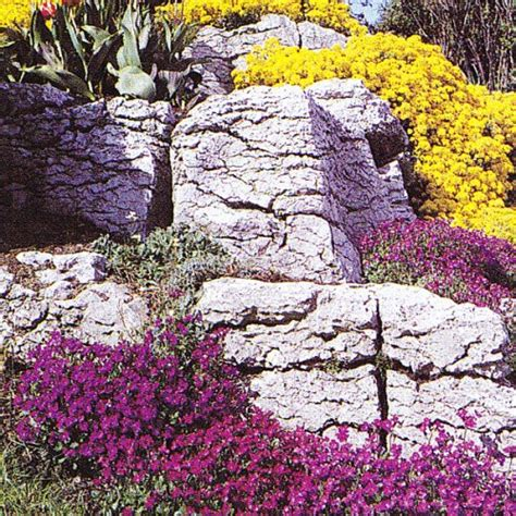 Gardening Articles About Rock Gardens Page 2 Rock Garden Plants Uk