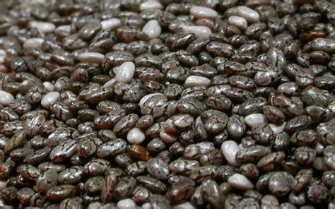 Organik Chia Seed 1 jual organik black chia seed cozy corner