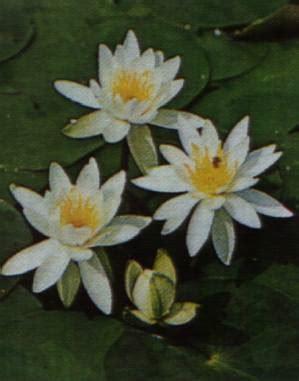 fiori in generale il significato dei fiori il portale di cultura generale