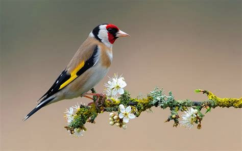 wallpaper with birds flowers for flower lovers flowers and birds desktop
