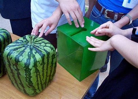 melones cuadrados garbancita 174 mel 243 n de 243 n