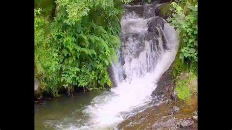 imagenes naturaleza relajante m 250 sica de relajaci 243 n bosque cascada naturaleza