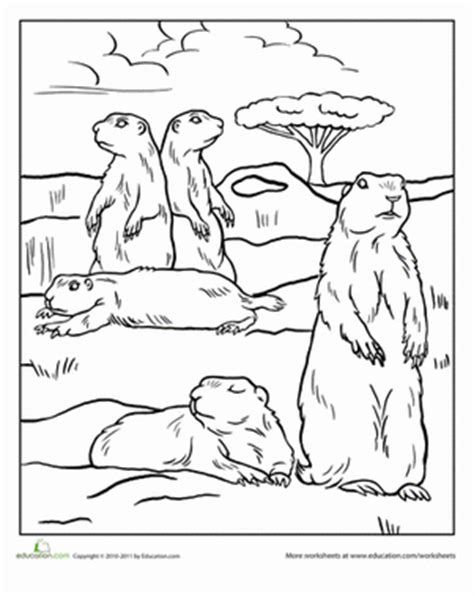 coloring pictures of prairie dogs color the prairie dogs coloring page education com