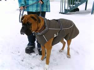 dog coats for boxers photo 1 dress the dog clothes