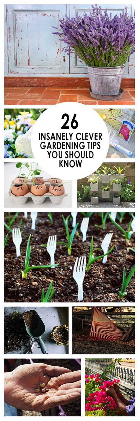 vegetable garden tips and tricks 26 insanely clever gardening tips you should bees