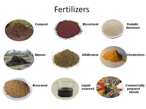 is fertilizer fertilizers for plants