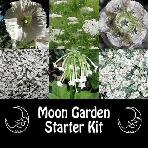 25 best ideas about moon garden on pinterest moon plant