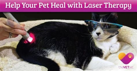 cold laser therapy for dogs the vet set now offers cold laser therapy for dogs and cats pet age