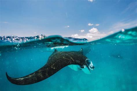 snorkeling trip  nusa penida manta bay crystal bay