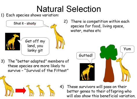56 narrative selection the new darwin and lamarck powerpoint a summary of lamarck s and