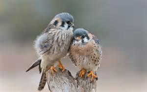 birds pictures love birds 1080p pictures wallpaperscharlie