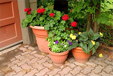 best flowers for small pots design ideas for small gardens domestic cleaning tips