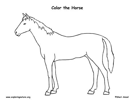 enzyme coloring sheet coloring pages